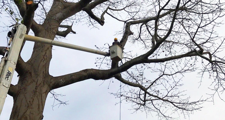Tree Trimming Snellville, Loganville, Grayson, Lawrenceville, Gwinnett County - U-savemore tree service
