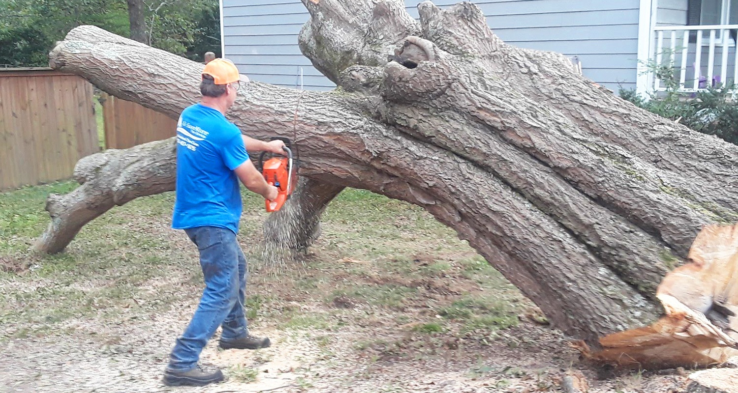 U-Savemore-tree-service-snellville-Tree-Trimming-Pruning-Reduction_6